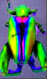 bugs-java-9.jpg